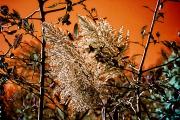 autumn-spendor