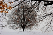 last-signs-of-autumn