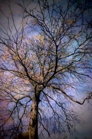 okon-tree