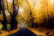 perfect-path