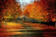 shades-of-autumn