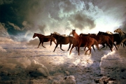 the-stallions